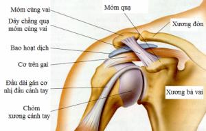 Khớp vai - Giải phẫu học Yoga